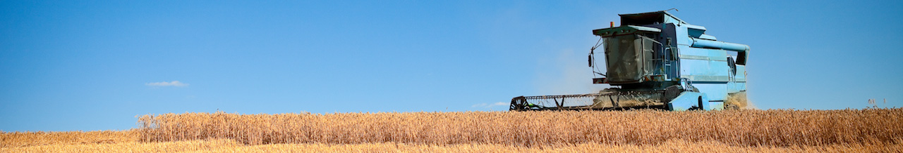 tractor with wheat 02 01